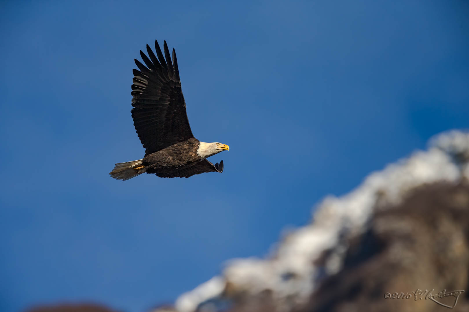 Bald Eagle IF 1175