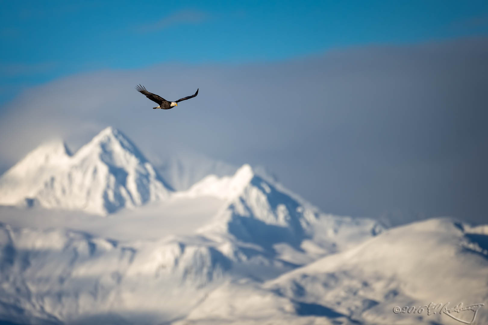 Bald Eagle IF against mountains