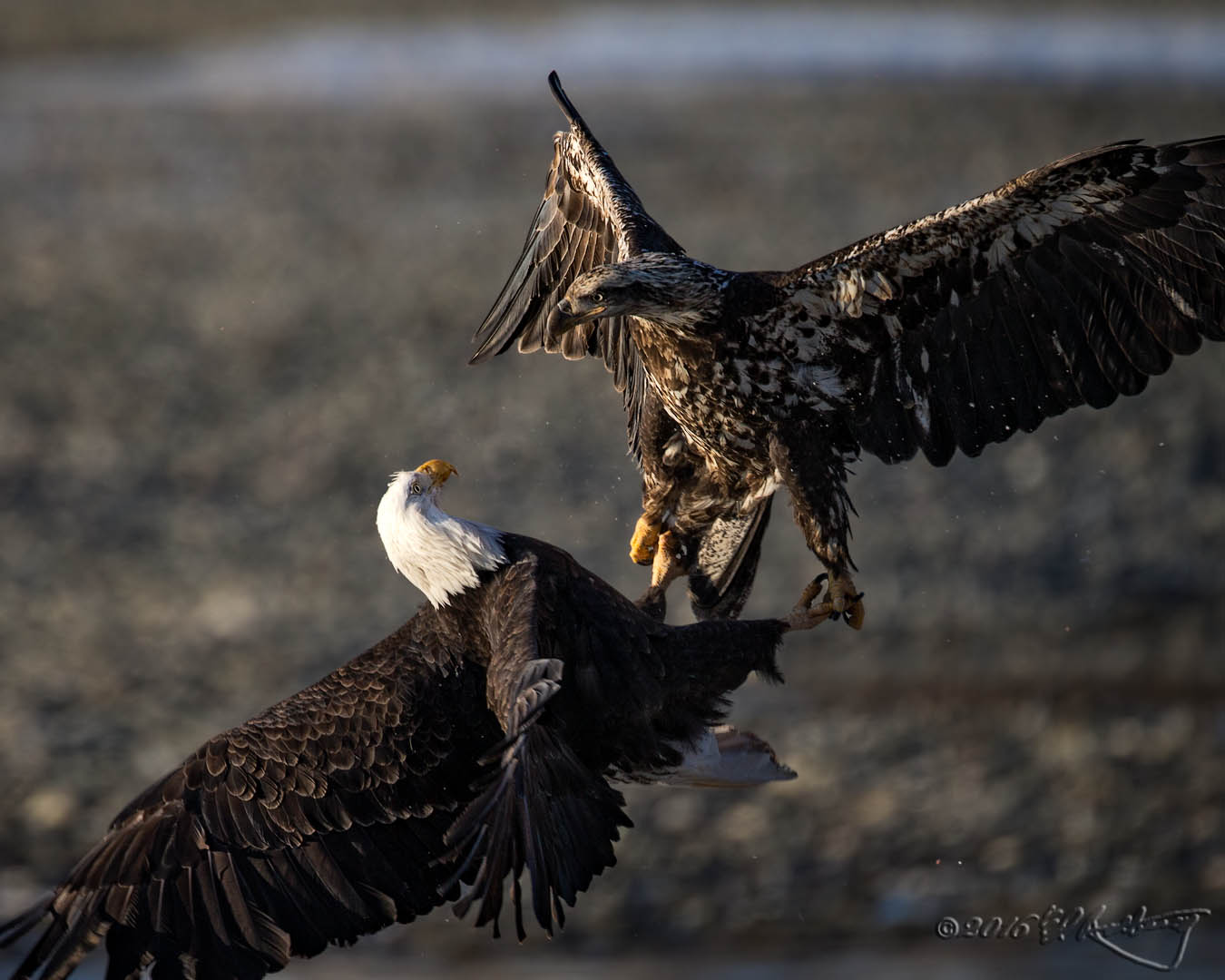 Eagles Attack 2