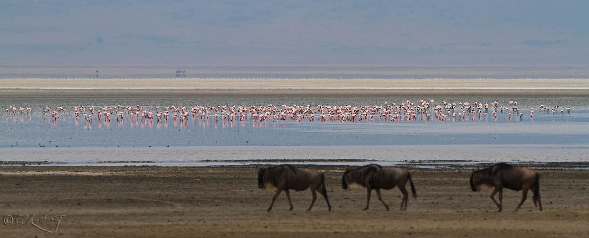 Flamingos_on_Ngorogoro_soda_lake