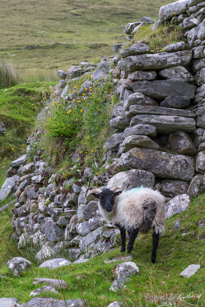 Ireland_2015-74