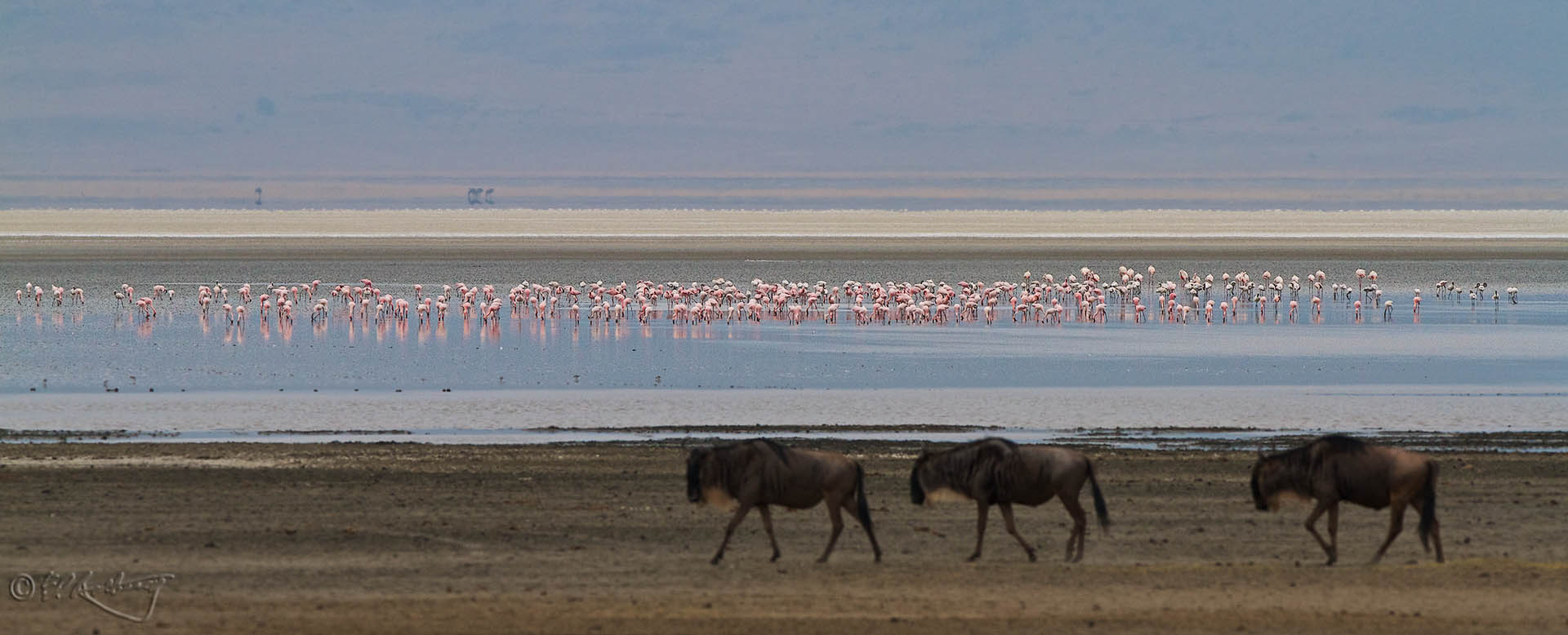 Flamingos_on_Ngorogoro_soda_lake-c100